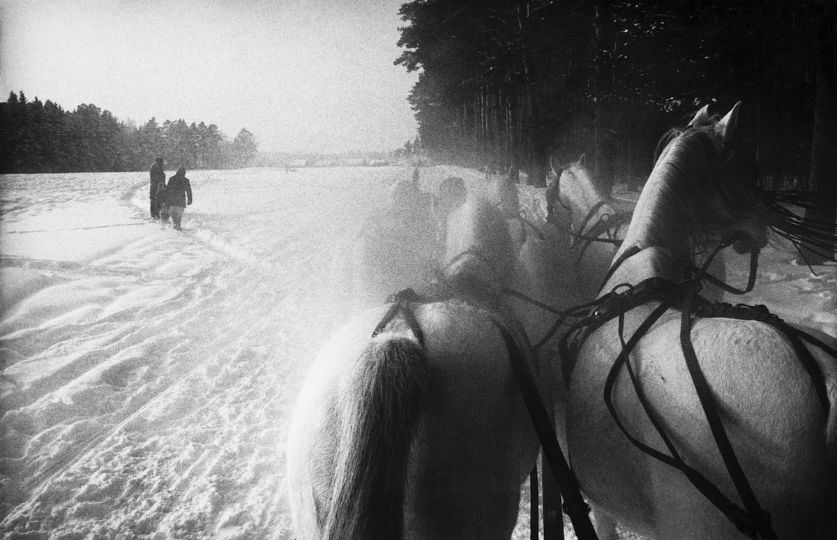USSR. Piatnika. Five horse sleigh on a stud farm 40 miles west of Moscow. 1965.